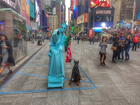 New York Dog Trainer: Doberman Off Leash in NYC-Best Dog Trainers in NY