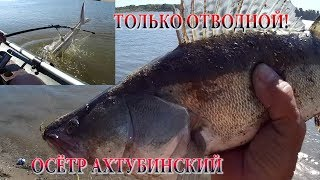 Ахтуба-клуб: Рыбалка на Ахтубе и нижней Волге - рыбалка и ...