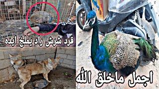 شاهد عجائب وغرائب الحيوانات في سوق النجف# سبحان الخالق