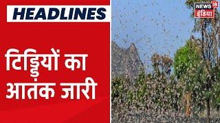 Corona के साथ साथ Rajasthan में टिड्डियों का कहर, फसलों को बचाने के उपाय में जुटे किसान