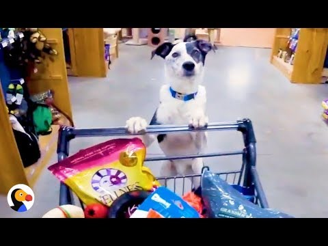 Dogs Break Out of Vet, Go On A Shopping Spree | The Dodo