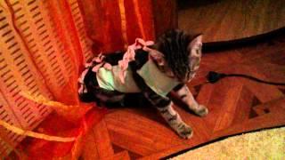Кошку штырит после наркоза 2