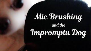 4 Brushes 1 Mic + Impromptu Dog Brushing - ASMR