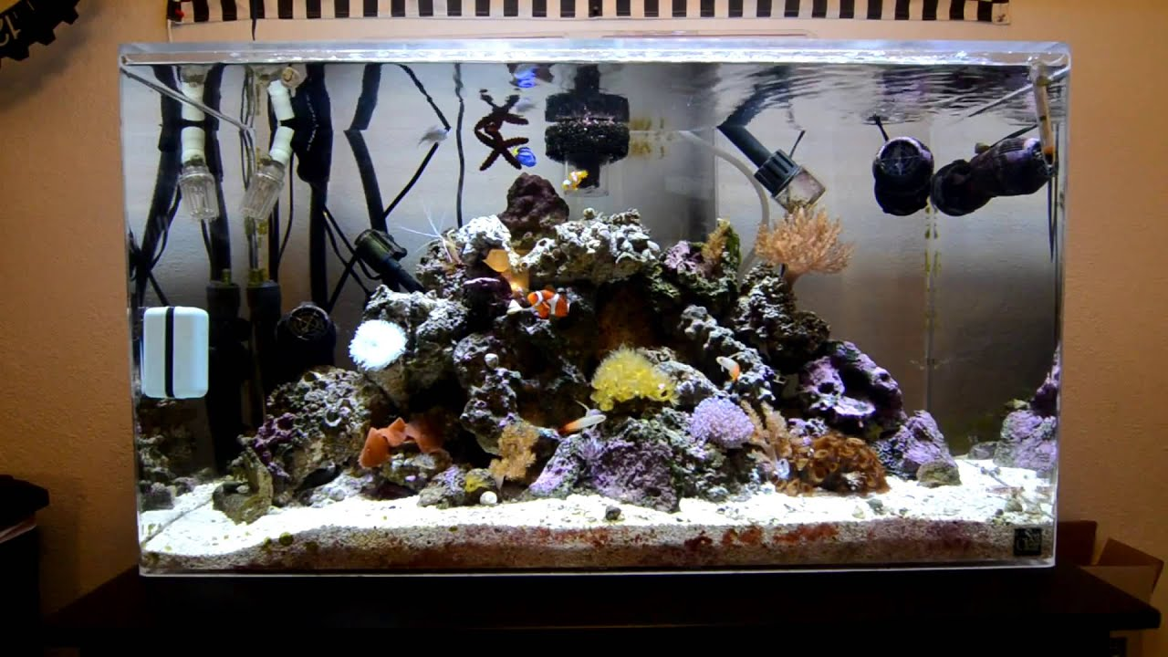50 gallon rimless led reef coral tank update 1 1080p youtube for Cheap 55 gallon fish tank