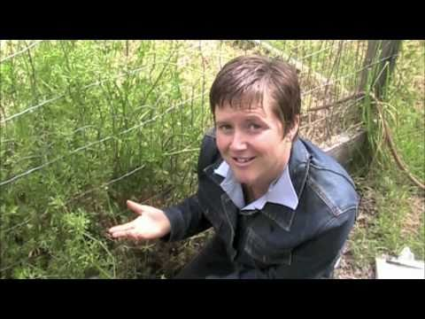 Wild Green World #2: Discover Your Backyard! Plant Tour
