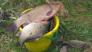 На рыбалке за нами наблюдали а потом напали Ловля карася на реке на поплавок My fishing