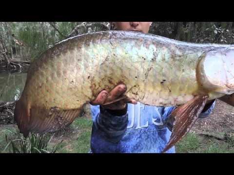 Saratoga Fishing Mackay