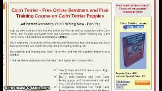 Here's Your Free Cairn Terrier Training Course - Cairn Terrier Training
