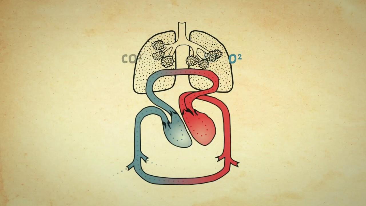 Herz Video