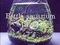 【水草水槽アクアリウム】ボトルアクアリウム  立ち上げ  ミスト式~注水
