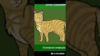 Коты водители персы.