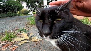 一旦は逃げかけた野良猫だったが恐る恐るモフられによってきた