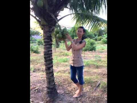 Thoại Khanh Châu Tuấn tancogiaoduyen- Hoàng Thu Tâm