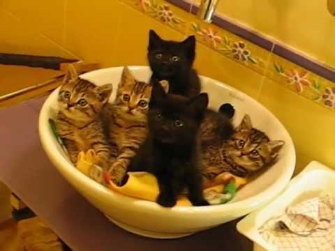 5 simpatici gattini - YES CATS - Telefono Difesa Animali