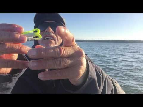Catching White Perch As They Begin To Spawn