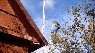 Спилить дерево по частям.(берёза)(не пробуйте повторить увиденное - это ОПАСНО для жизни, обратитесь к профессионалам. www.dereva-net.ucoz.ru Санкт-Пет..., 2011-09-17T18:24:32.000Z)