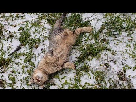 Quando ha nevicato
