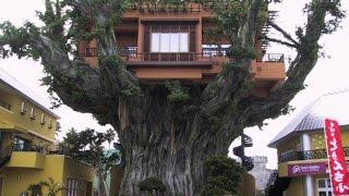 Самые необычные дома из дерева в мире(Видео подборка идей самых необычных домов из дерева. Необычных домов много. Даже самых необычных домов..., 2015-11-25T19:22:15.000Z)