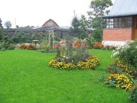 Как обхитрить вредителей сада и огорода?