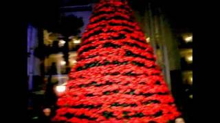 Trees of Christmas at Opryland Resort Thumbnail