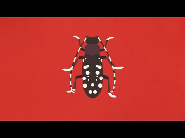 ทำไมจึงมีแมลงจำนวนมากมายนัก - Murry Gans