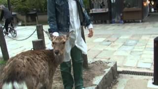 2012吉田羊IN京都③