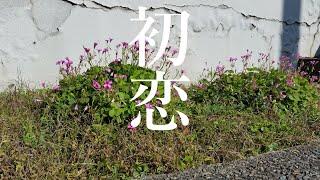 初恋(石川啄木編)(倍賞千恵子 / 唱歌)唄:螢