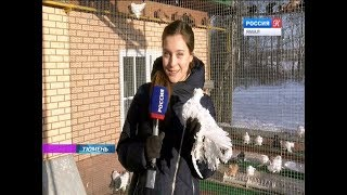 В Тюмени откроется выставка голубей Юрия Неелова, известного своей страстью к птицам