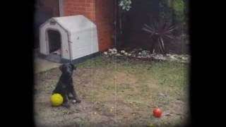 Little dog playing in the garden.
