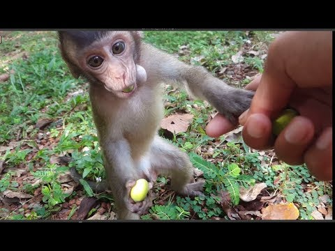 This video make me love Charles more than 100%, Happy day of baby monkey Charles, We love animals