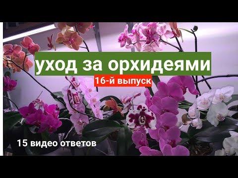 уход за орхидеями 15 вопросов / фитоверм для орхидей и панцирный клещ