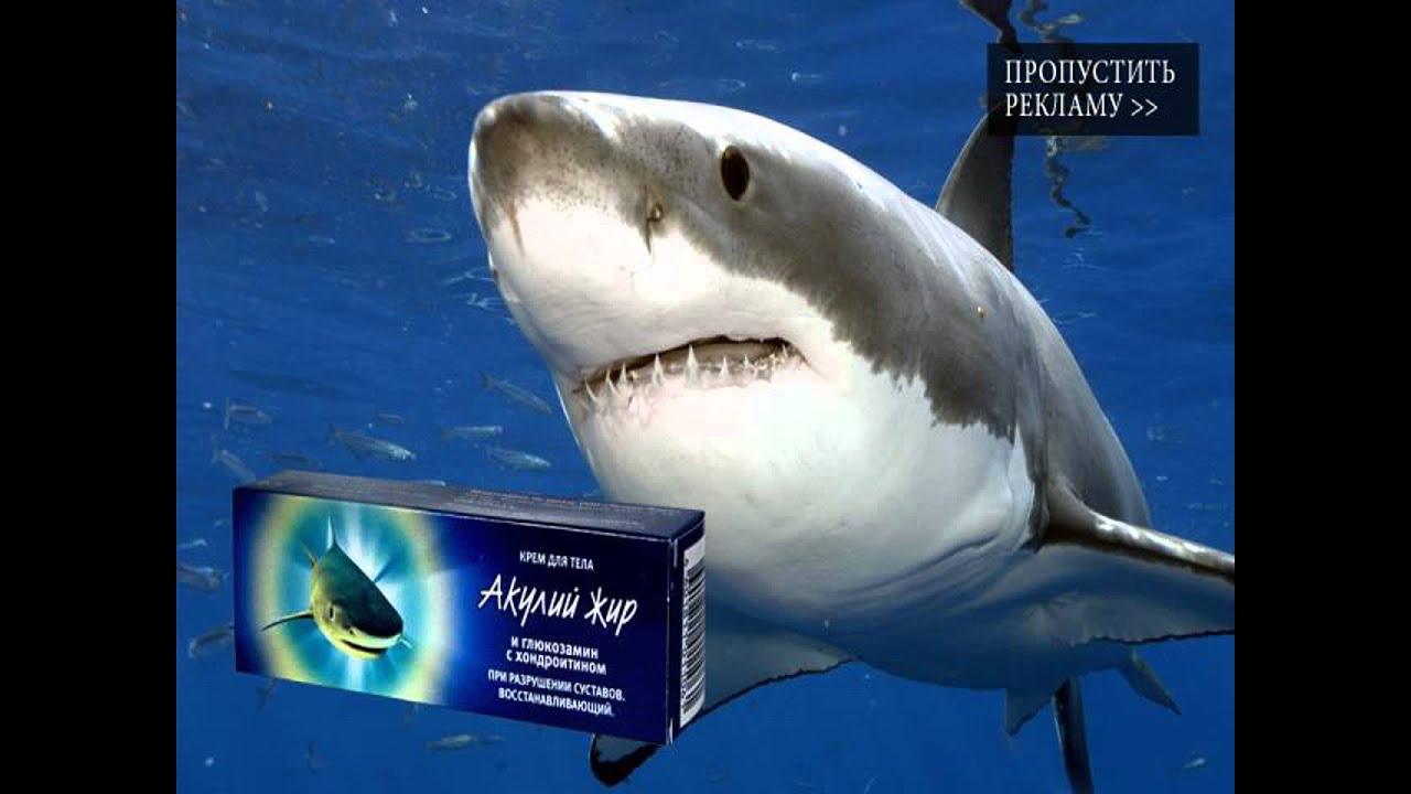 Unguent de grăsime de rechin pentru varice
