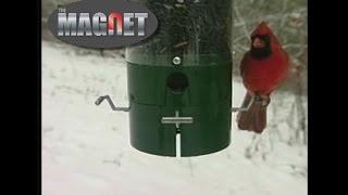 Innovative Bird Feeder Keeps Squirrels Away | Drsfostersmith.com