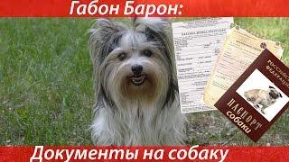 Габон Барон: Документы на собаку