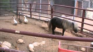 Animals at Bonnie Springs, Las Vegas, Nevada