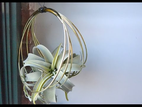 Diy Modern Air Plant Display Youtube