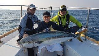부시리 최대어 158cm, 36kg (국내 최대 기록어). Offshore casting game. Yellowtail amverjack 158cm(36kg)