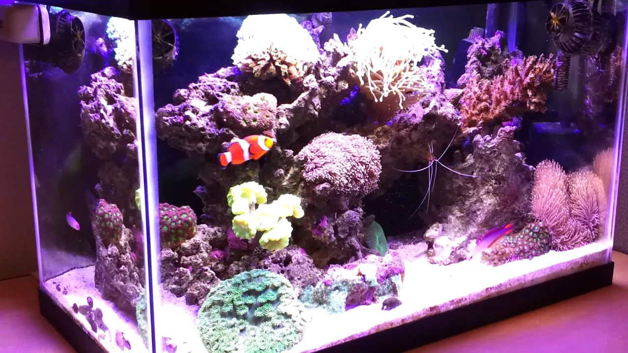 10 gallon nano reef tank 7 months old youtube for How to make saltwater for fish