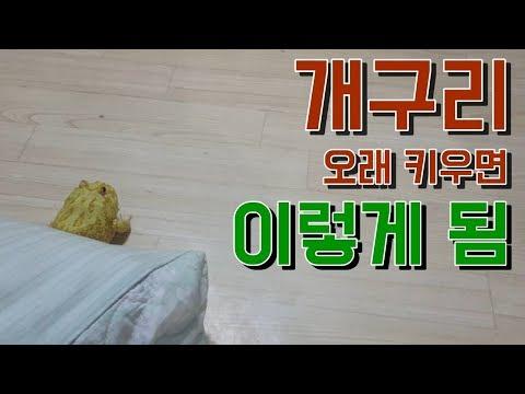 *너가 왜 거실에 있냐..* 진짜 개구리 오래키우면 이렇게 됨 ㅋㅋㅋㅋㅋ
