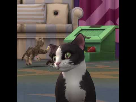 The Sims 4 Cats & Dogs: Cat and Raccoon Trailer