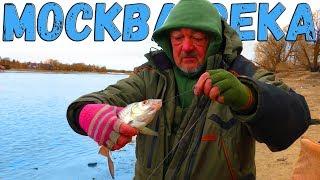 Рыбалка на Москва реке Володя душит ПЛОТВУ Кормим собак