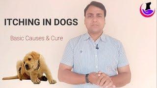 Dog को खुजली (itching) क्यो होती है?