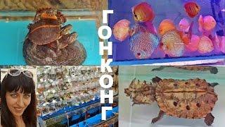 Гонконг Рынок Золотая Рыбка, Коулун