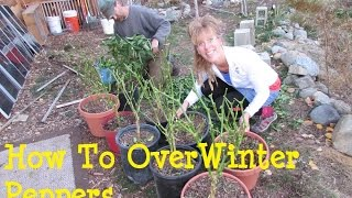 Organic Gardening: Over Wintering Your Pepper Plants