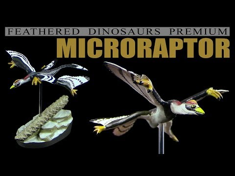 Colorata ® Microraptor - Feathered Dinosaurs Premium - Unboxing Teil 7
