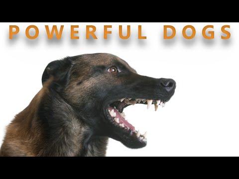 பலசாலி நாய்கள் |POWERFUL DOGS | Storyboard