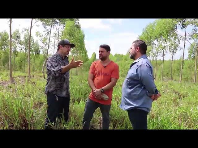 Integração Pecuária Floresta já é uma realidade em Alagoas 17/06/2019