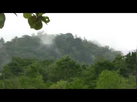 Mist Rising Tropical Jungle Mountain