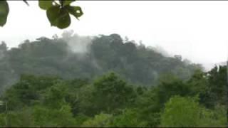 Mist Rising Tropical Jungle Mountain
