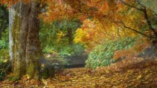 Autumn - Maestro